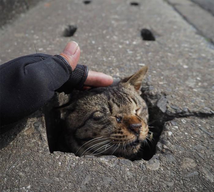 Fotografer Jepang Berhasil Mengabadikan Kucing Liar yang Merubah Trotoar Menjadi Rumah & Tempat Bermain Bagi Mereka 5