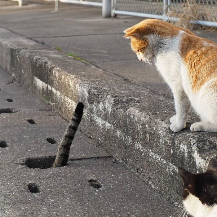 Fotografer Jepang Berhasil Mengabadikan Kucing Liar yang Merubah Trotoar Menjadi Rumah & Tempat Bermain Bagi Mereka 8