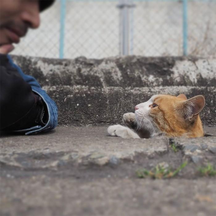 Fotografer Jepang Berhasil Mengabadikan Kucing Liar yang Merubah Trotoar Menjadi Rumah & Tempat Bermain Bagi Mereka 14