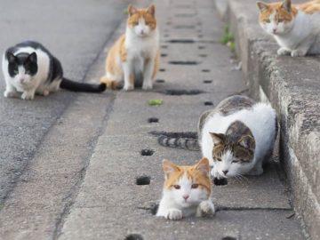 Fotografer Jepang Berhasil Mengabadikan Kucing Liar yang Merubah Trotoar Menjadi Rumah & Tempat Bermain Bagi Mereka 11