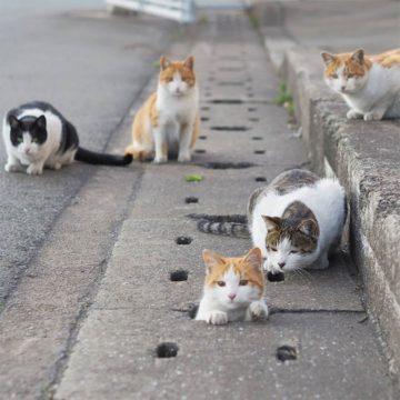 Fotografer Jepang Berhasil Mengabadikan Kucing Liar yang Merubah Trotoar Menjadi Rumah & Tempat Bermain Bagi Mereka 13