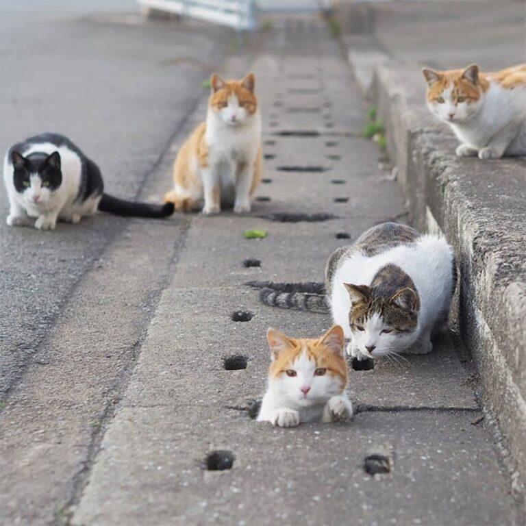 Fotografer Jepang Berhasil Mengabadikan Kucing Liar yang Merubah Trotoar Menjadi Rumah & Tempat Bermain Bagi Mereka 1