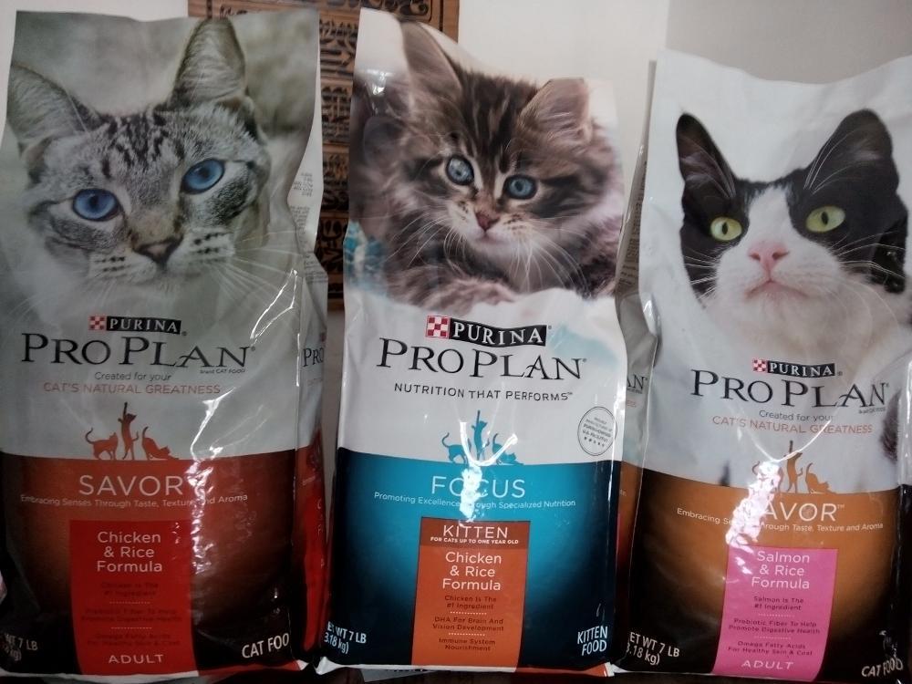 5 Jenis Makanan Kucing Yang Cocok dan Berkualitas Terbaik Untuk Pecinta Kucing Miliki 4