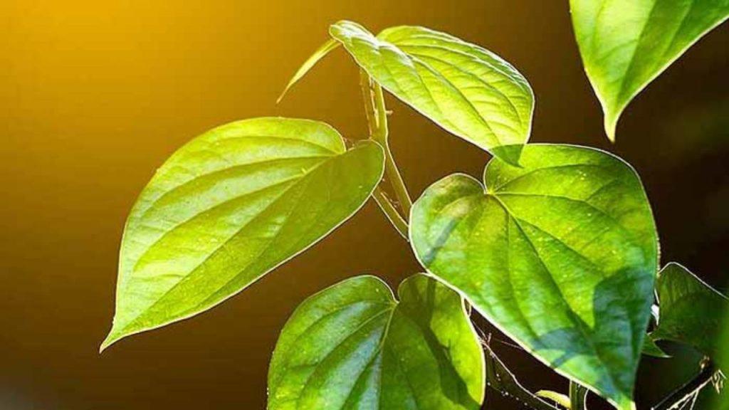 5 Cara Menghilangkan Bau Mulut Secara Cepat dan Alami 5