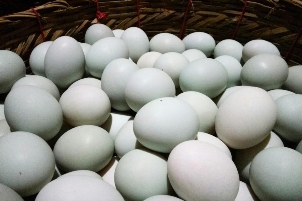 5 Alasan Kenapa Telur Asin Selalu Memakai Telur Bebek 6