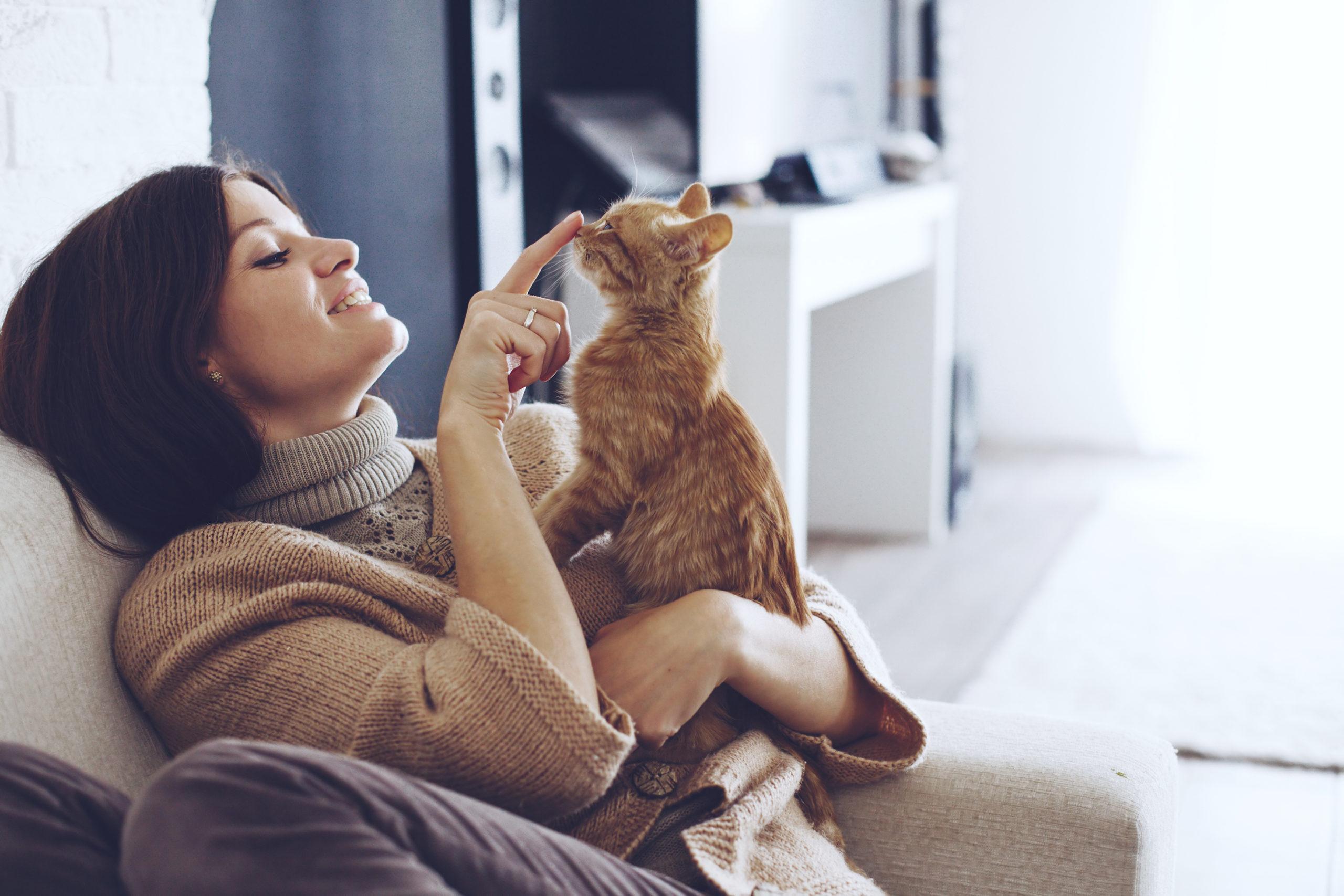 5 Suka Duka Saat Memelihara Kucing, Cat Lovers Wajib Tahu 3