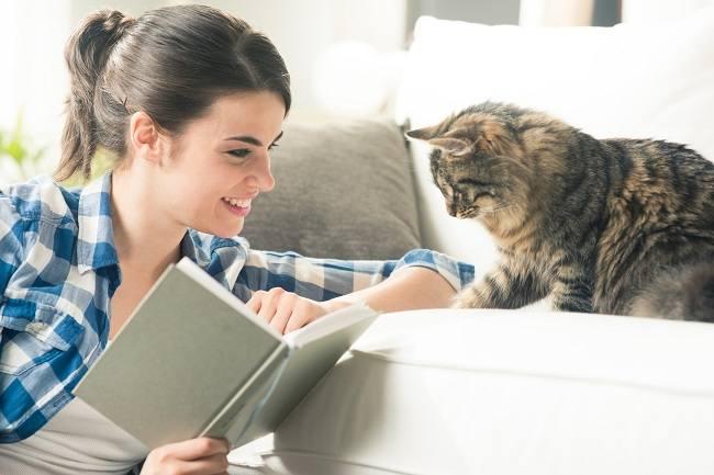 5 Suka Duka Saat Memelihara Kucing, Cat Lovers Wajib Tahu 4