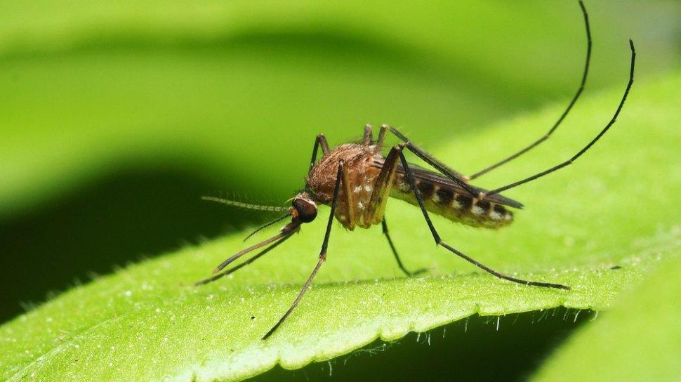 5 Hewan Pembawa Virus dan Bakteri, Hindari Agar Tetap Aman ya 4