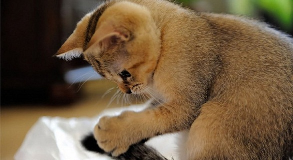 5 Suka Duka Saat Memelihara Kucing, Cat Lovers Wajib Tahu 5