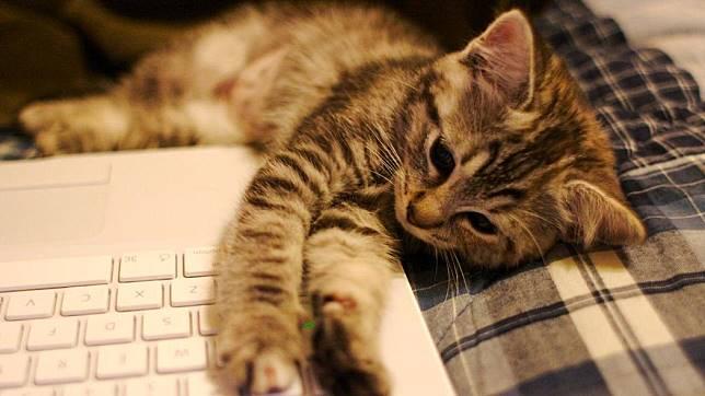 5 Suka Duka Saat Memelihara Kucing, Cat Lovers Wajib Tahu 6
