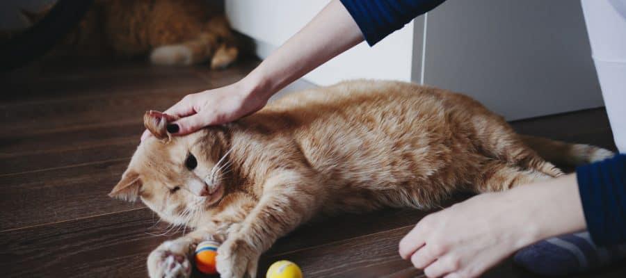 5 Suka Duka Saat Memelihara Kucing, Cat Lovers Wajib Tahu 7