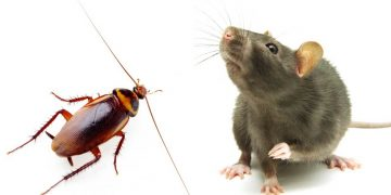 tikus & kecoak