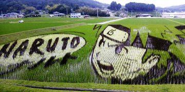 Tambo Art, Seni 'Melukis' di Sawah Asal Negeri Jepang 16
