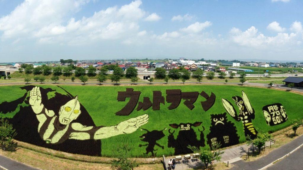 Tambo Art, Seni 'Melukis' di Sawah Asal Negeri Jepang 9