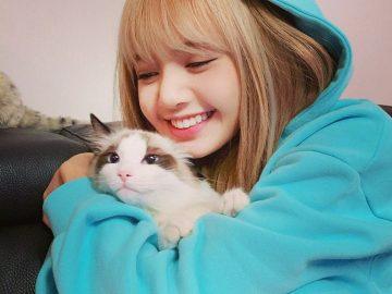 5 Suka Duka Saat Memelihara Kucing, Cat Lovers Wajib Tahu 15