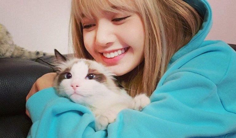 5 Suka Duka Saat Memelihara Kucing, Cat Lovers Wajib Tahu