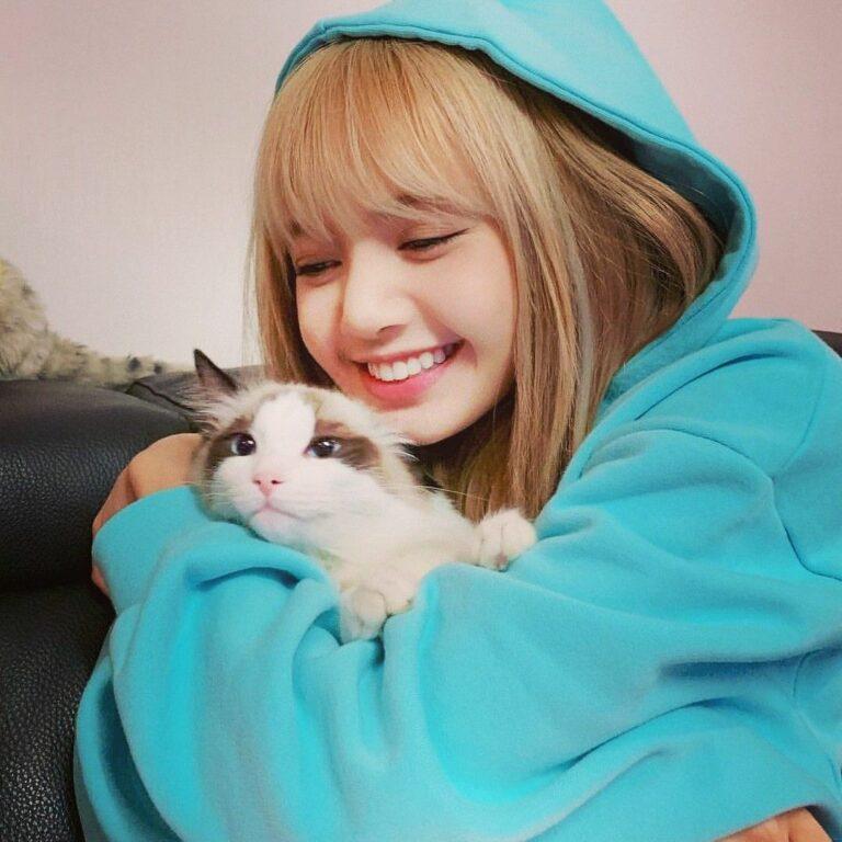 5 Suka Duka Saat Memelihara Kucing, Cat Lovers Wajib Tahu 1