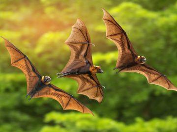 5 Hewan Pembawa Virus dan Bakteri, Hindari Agar Tetap Aman ya 17