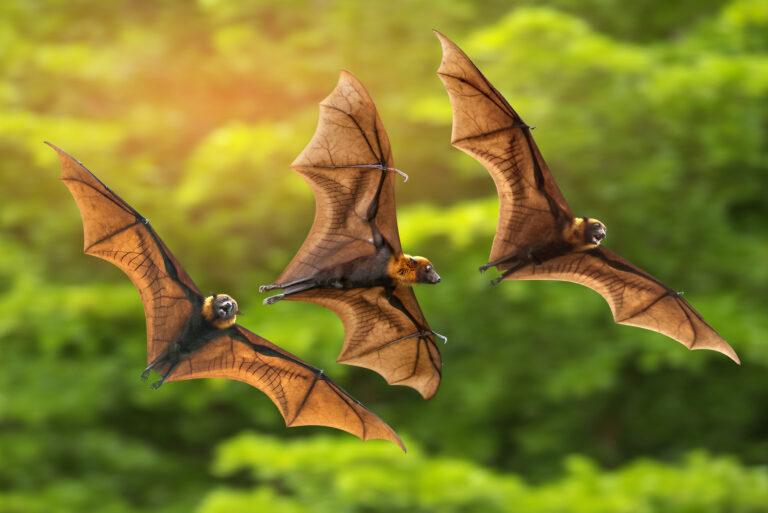 5 Hewan Pembawa Virus dan Bakteri, Hindari Agar Tetap Aman ya 1