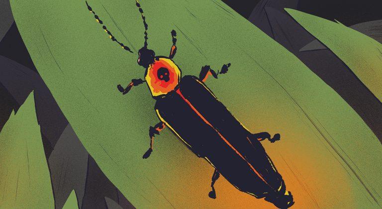 Kunang - kunang untuk Ray 1