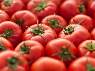 Jerawatan? Nih, Ogut Kasih Tahu Manfaat Tomat! 14