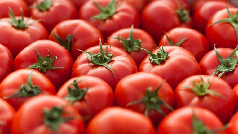 Jerawatan? Nih, Ogut Kasih Tahu Manfaat Tomat! 1