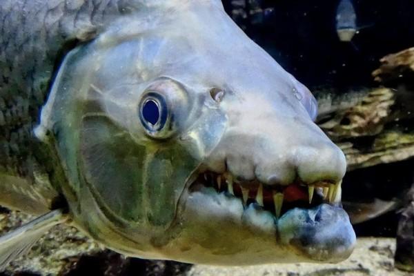 Selain Hiu, Inilah 9 Ikan Paling Berbahaya di Dunia 1
