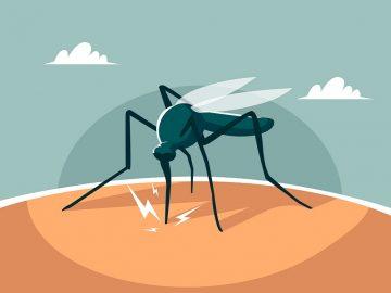 8 Bahan Alami Ampuh untuk Atasi Malaria 13
