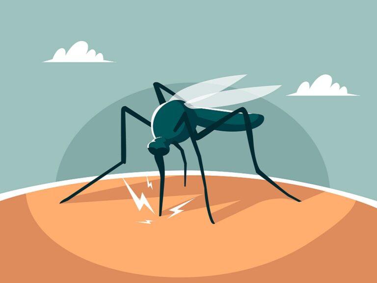 8 Bahan Alami Ampuh untuk Atasi Malaria 1