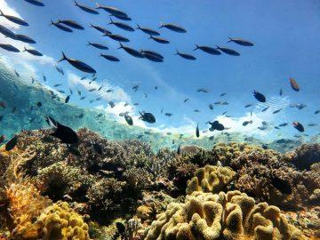 Taman Nasional Wakatobi, Keindahan Surga Bawah Laut yang Tak Tertandingi! 15