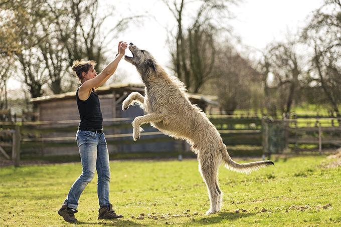 5 Anjing Terpanjang di Dunia, Mau Pelihara? 3
