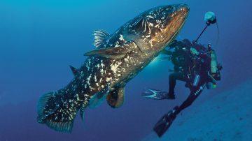 Sempat Dianggap Punah, 6 Spesies Hewan Ini Muncul Secara Mengejutkan 3