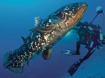 Sempat Dianggap Punah, 6 Spesies Hewan Ini Muncul Secara Mengejutkan 31