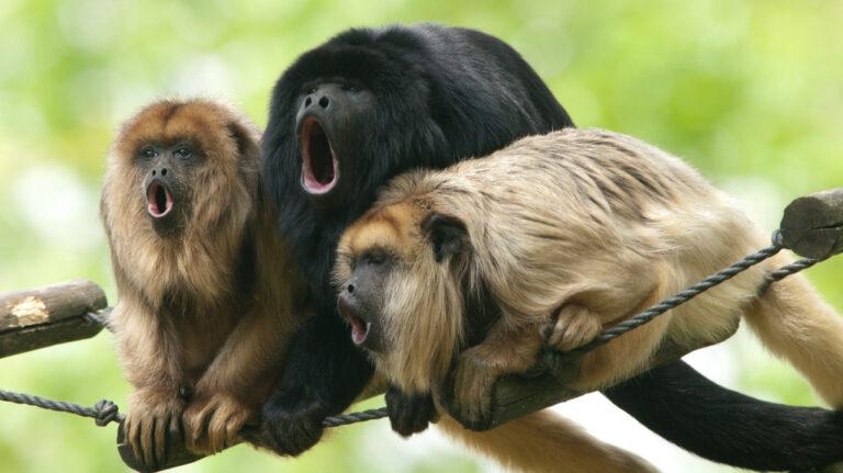 8 Hewan yang Memiliki Suara Paling Keras di Dunia 1