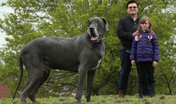 5 Anjing Terpanjang di Dunia, Mau Pelihara? 5