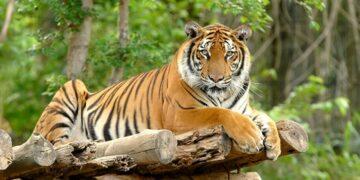 4 Hewan Asli Indonesia ini Ternyata Sudah Dinyatakan Punah 6