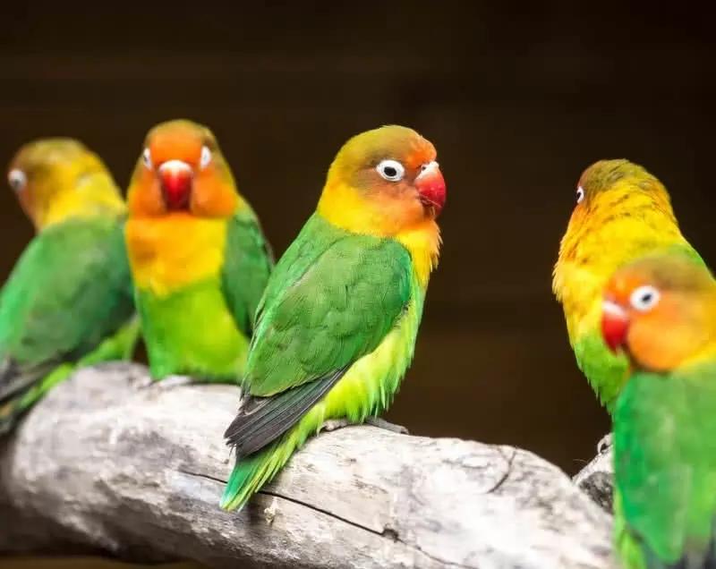 10 Hewan Paling Berwarna di Dunia, Unik Banget 8
