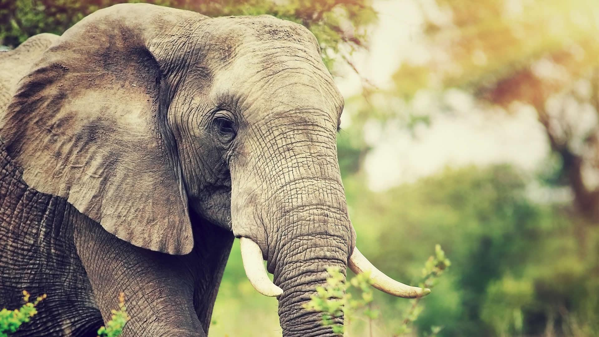 6 Hewan yang Memiliki Penciuman Paling Tajam di Dunia 5