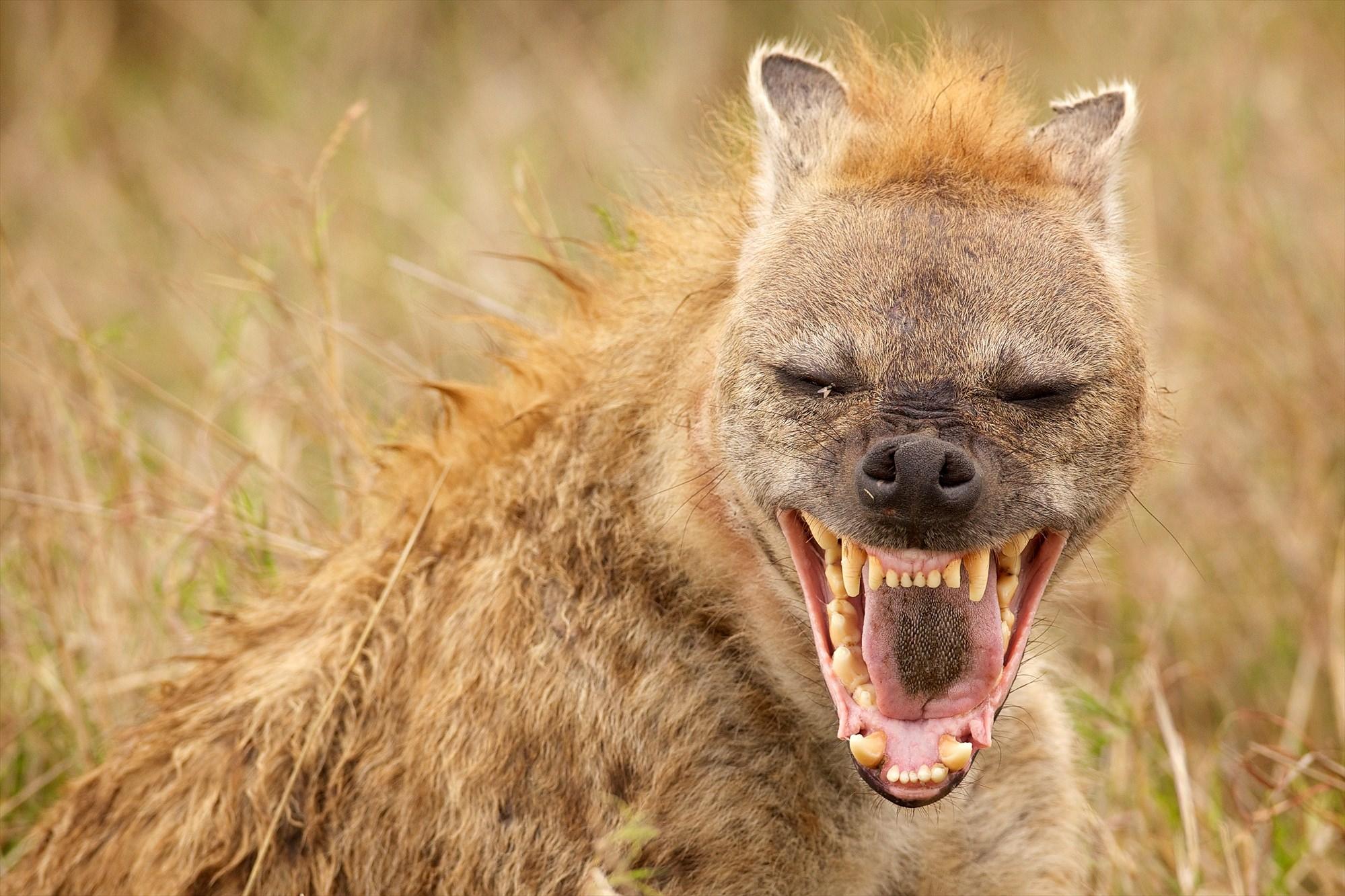 8 Hewan yang Memiliki Suara Paling Keras di Dunia 3