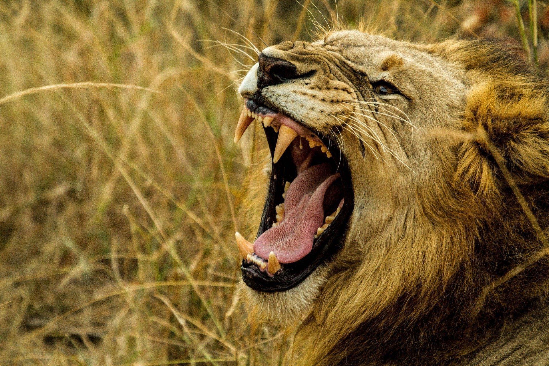 8 Hewan yang Memiliki Suara Paling Keras di Dunia 5