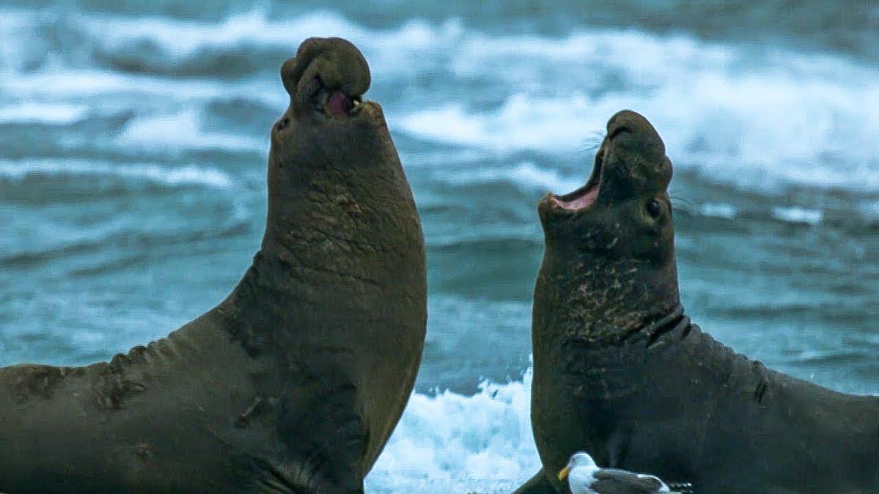 8 Hewan yang Memiliki Suara Paling Keras di Dunia 8