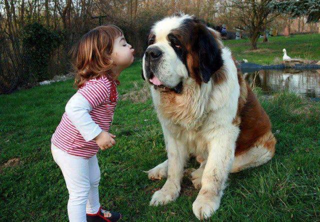 5 Anjing Terpanjang di Dunia, Mau Pelihara? 4
