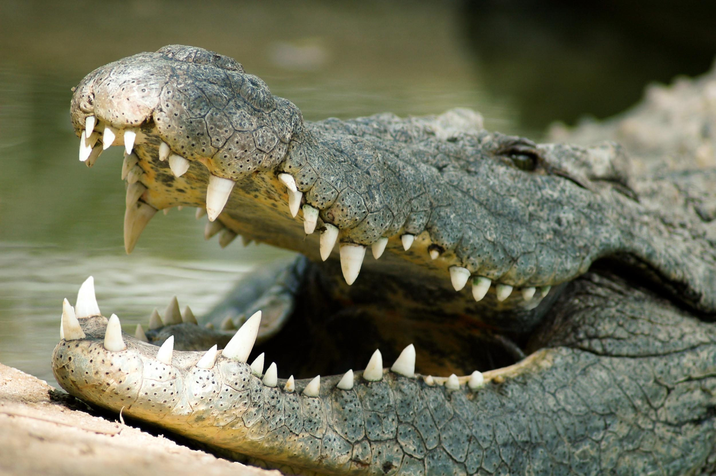 5 Hewan yang Memiliki Gigi Paling Menakutkan 4