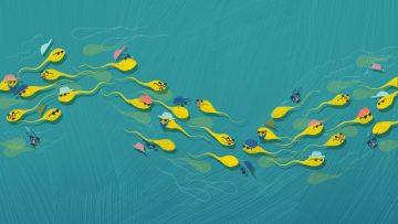 8 Fakta Menarik Tentang Sperma Wajib Kamu Tahu 9