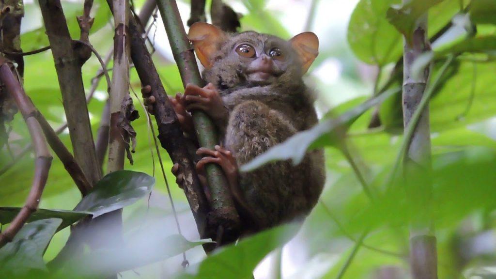Daftar Hewan Nokturnal, no 8 Karakter di Madagaskar! 3