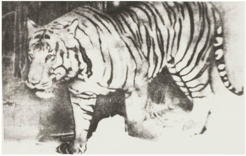 4 Hewan Asli Indonesia ini Ternyata Sudah Dinyatakan Punah 4
