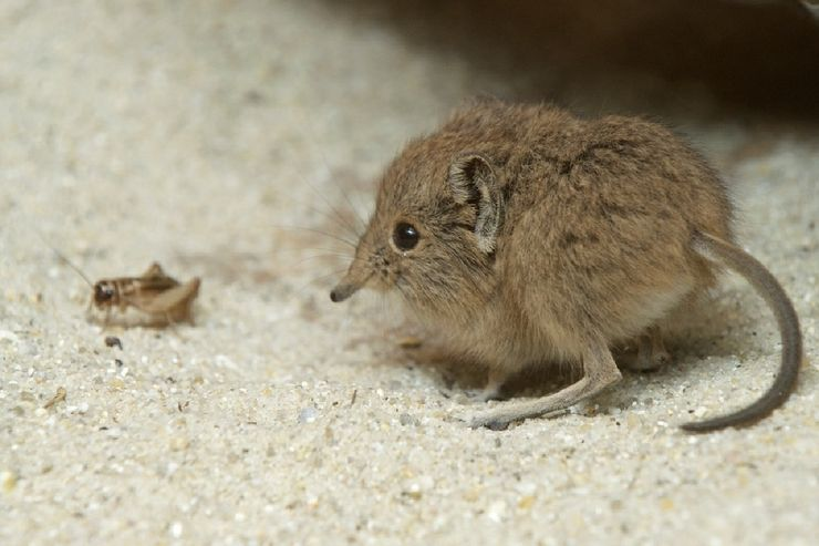 Sempat Dianggap Punah, 6 Spesies Hewan Ini Muncul Secara Mengejutkan 6