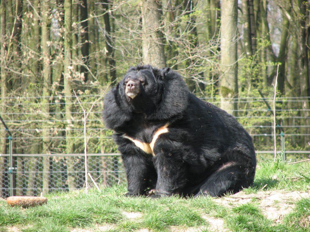 8 Jenis Beruang yang Tersisa di Dunia Saat Ini 9