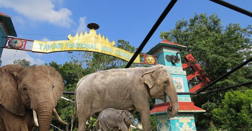 5 Taman Nasional di Sumatra yang Cocok Buat Liburan 4