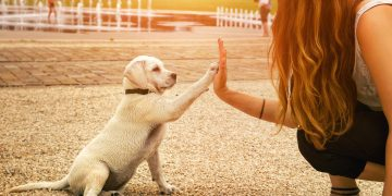 5 Pekerjaan yang Cocok Bagi Para Pecinta Hewan 18